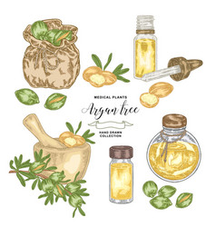 argan tree argania spinosa set nuts leaves vector image