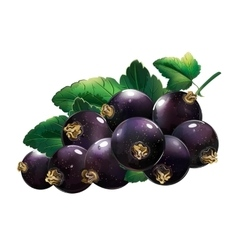 Black Currant With Leaves vector
