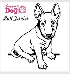 Bull terrier puppy sitting drawing hand vector