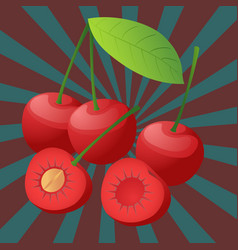 Cherry sectional vector image
