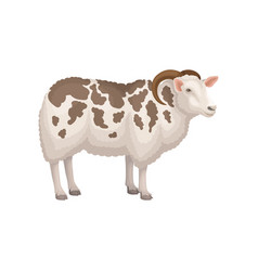 Flat icon of jacob sheep side view vector