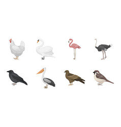 Types of birds icons in set collection for design vector
