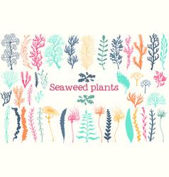 sea plants and aquarium seaweed set vector image vector image