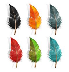 bird feather set vector image