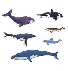 sea mammals cetacea - vector image