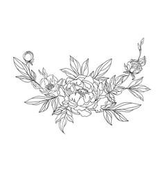blooming peonies vector image