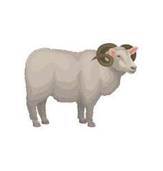 Detailed flat icon of male sheep adult ram vector