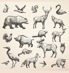European forrest wild animals collection of vector