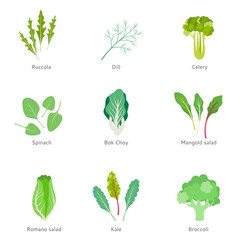 Healthy ingredients for vegetable salad vector