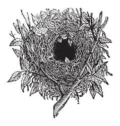 Nest of wren vintage vector