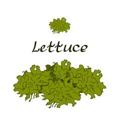 tasty veggies lettuce vector image