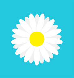 White daisy chamomile marguerite icon cute flower vector