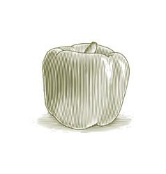 woodcut bell pepper vector image