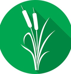 Reeds Icon vector image