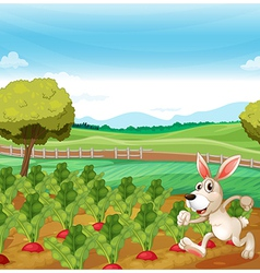 A bunny running in the farm vector image