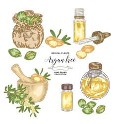 Argan tree argania spinosa set nuts leaves vector