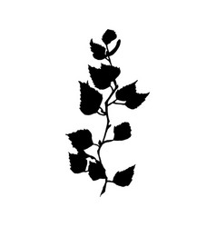 birch tree branch black silhouette vector image