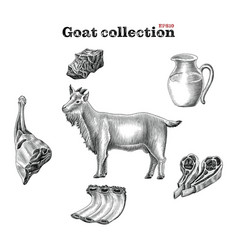 goat collection hand draw vintage engraving style vector image