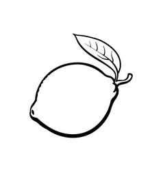 Whole shiny ripe lime with a leaf vector