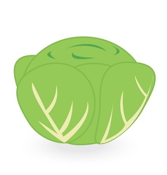 lettuce isolated on white background vector image