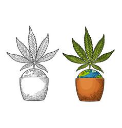 Marijuana plant with leaf in pot vintage vector