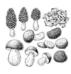 Mushroom hand drawn Sketch vector