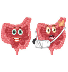 Set of healthy and injured intestine vector