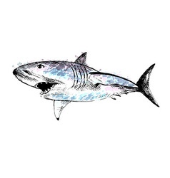 Colored hand drawing of a shark vector image