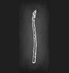 chalk sketch asparagus vector image