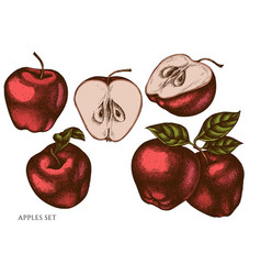 set hand drawn colored apples vector image