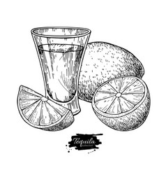tequila shot glass with lime mexican alcohol vector image