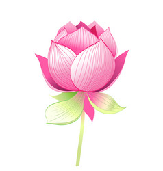 Beautiful lotus flower vector