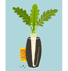 Growing Daikon Radish with Green Leafy Top in Vase vector image