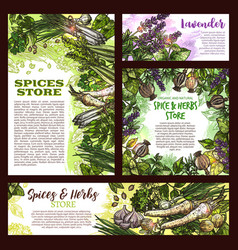 Spices store sketch posters of herbs vector
