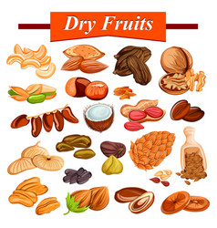 assorted dry fruit set including cashewnut almond vector image vector image