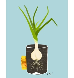 Growing Garlic with Green Leafy Top in Mug vector image