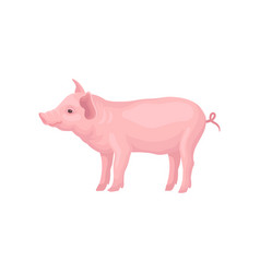 Icon of stranding pig isolated on white vector