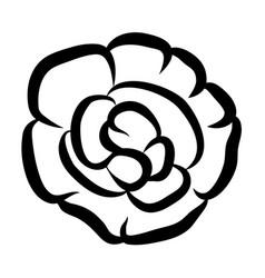 impatiens flower vector image
