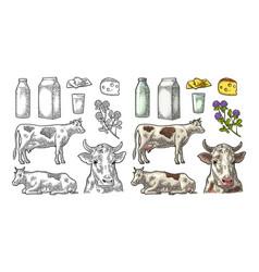 Set milk farm cow clover box cheese glass and vector