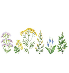 Watercolor banner with medical plants vector
