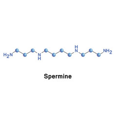 spermine is a polyamine vector image vector image