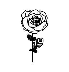 figure rose with petals and leaves icon vector image