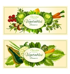 Vegetables fruits and salad greens banners set vector image