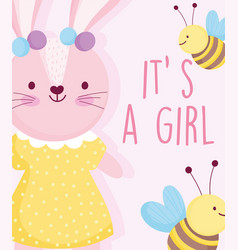 Boy or girl gender reveal cute rabbit with dotted vector