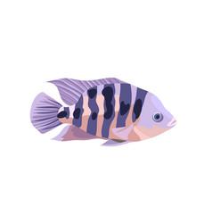 Cartoon cichlid fish isolated vector
