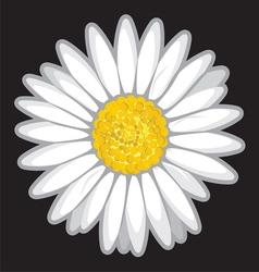 Daisy flower isolated on black vector