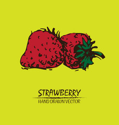Digital detailed color strawberry drawn vector