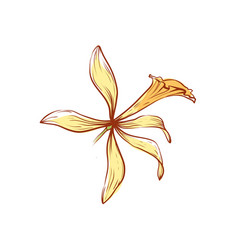 Natural vanilla flower isolated icon vector