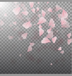 pink sakura falling petals vector image