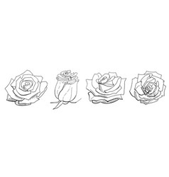 roses isolated on white background set of vector image
